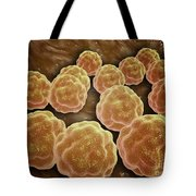 Microscopic View Of Rubella Virus Tote Bag by Stocktrek Images