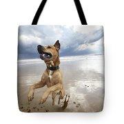 Mid-air Beach Dog Tote Bag by Eldad Carin
