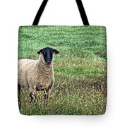 Middle Child - Blackfaced Sheep Tote Bag