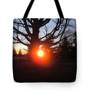 Middle Of The Tree Sunset Tote Bag