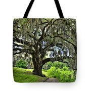 Middleton Place Oak  Tote Bag