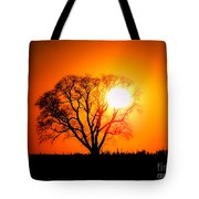 Mighty Oak Sunset Tote Bag