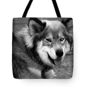 Miley The Husky With Blue And Brown Eyes - Black And White Tote Bag by Doc Braham