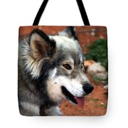Miley The Husky With Blue And Brown Eyes Tote Bag by Doc Braham