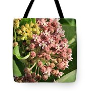 Milkweed Flowers In Bud Tote Bag