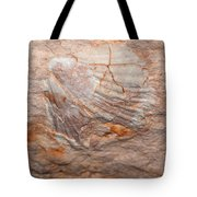 million years ago 2 - An enormeous shell fossile in top of cova des coloms in Es Migjorn - Menorca Tote Bag
