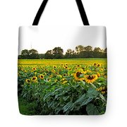 Millions Of Sunflowers Tote Bag by Danielle  Parent