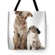 Miniature American Shepherd With Puppy Tote Bag