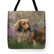 Miniature Long-haired Dachshund Tote Bag