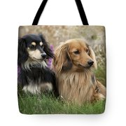 Miniature Long-haired Dachshunds Tote Bag