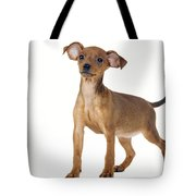 Miniature Pinscher Puppy Tote Bag
