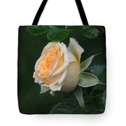 Miniature Rose In The Rain Tote Bag