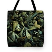 Miocene Fossil Shark Tooth Assortment Tote Bag