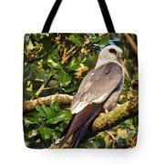 Mississippi Kite Tote Bag