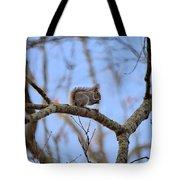 Mister Squirrel Tote Bag