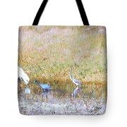 Mixed Shore Birds Tote Bag