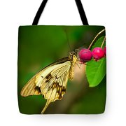 Mocker Swallowtail Butterfly And Berries Tote Bag