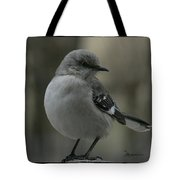 Mocking Bird Cuteness - Featured In Wildlife Group Tote Bag