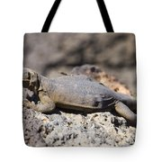 Mojave Desert Chuckwalla Tote Bag