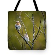 Momma Bluebird And Baby Tote Bag