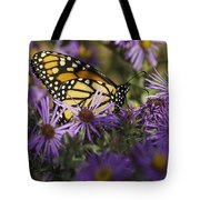 Monarch And Asters Tote Bag