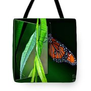 Monarch Butterfly 04 Tote Bag