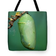 Monarch Butterfly Chrysalis Developing Tote Bag