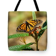 Monarch Butterfly On Plant With Eggs Tote Bag