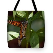 Monarch In The Shade Tote Bag