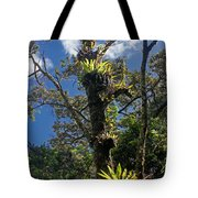 Montagne D'ambre National Park Madagascar 4 Tote Bag