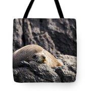 Montague Island Seal Tote Bag
