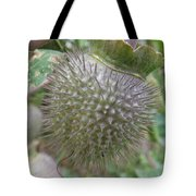 Moon Flower Seed Pod Tote Bag
