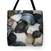 Moon Snails And Shells Still Life Tote Bag
