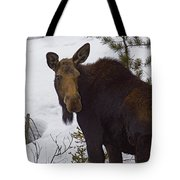 Moose   #1612 Tote Bag