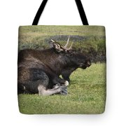 Moose At Rest Tote Bag