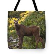 Moose Baby Sniffing Morning Air Tote Bag