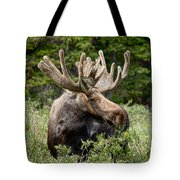 Moose Be Too Cool Tote Bag