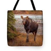 Moose Calf Tote Bag
