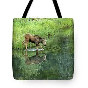 Moose Calf Testing The Water Tote Bag