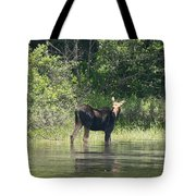 New Hampshire Grazing Cow Moose  Tote Bag