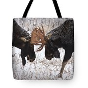 Moose Fighting, Gaspesie National Park Tote Bag by Nicolas Bradette