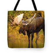 Moose In Glacial Kettle Pond  Tote Bag