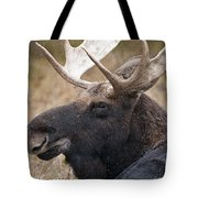 Moose Pictures 101 Tote Bag