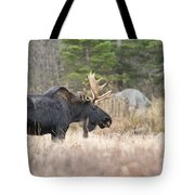 Moose Pictures 75 Tote Bag