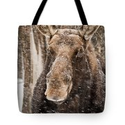 Moose Pictures 88 Tote Bag
