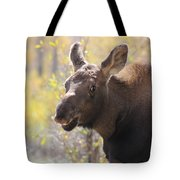 Moose Who Lost His Mother Tote Bag