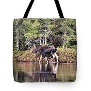 Moose_0586 Tote Bag