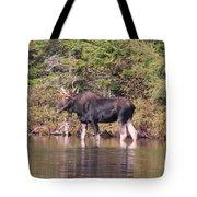 Moose_0591b Tote Bag