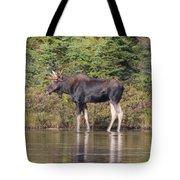 Moose_0596 Tote Bag