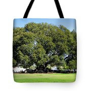 Moreton Fig Tree In Santa Barbara Tote Bag